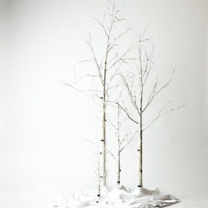 Lit Birch Trees
